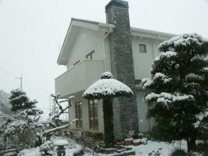 雪-ウバメガシ