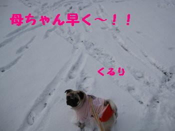 IMG_0154_1.jpg