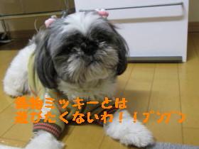 IMG_0167_1.jpg
