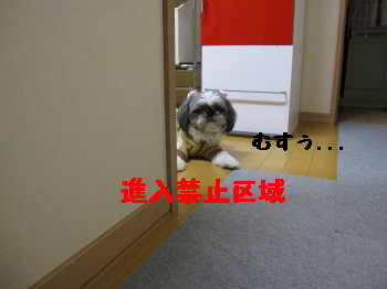 IMG_0170_1.jpg