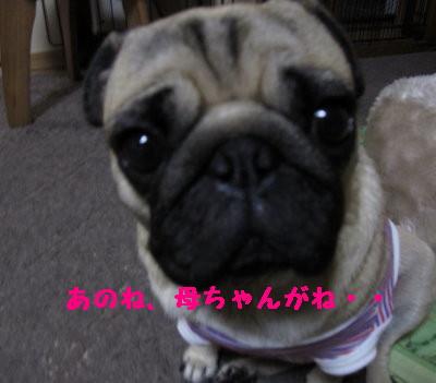 IMG_0184_1.jpg