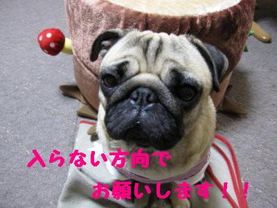IMG_0187_1.jpg