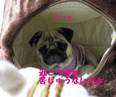 IMG_0191_1.jpg