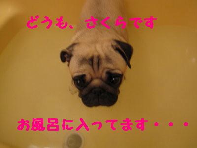 IMG_0270_1.jpg