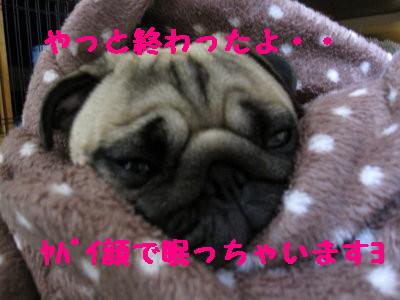IMG_0285_1.jpg