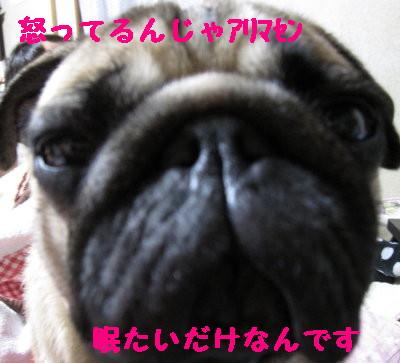 IMG_0310_1.jpg