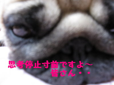 IMG_0312_1.jpg