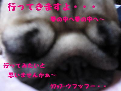 IMG_0313_1.jpg