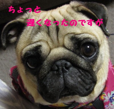 IMG_0351_1.jpg