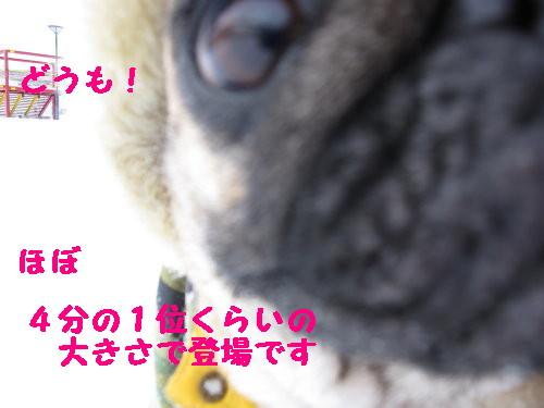 IMG_0372_2.jpg
