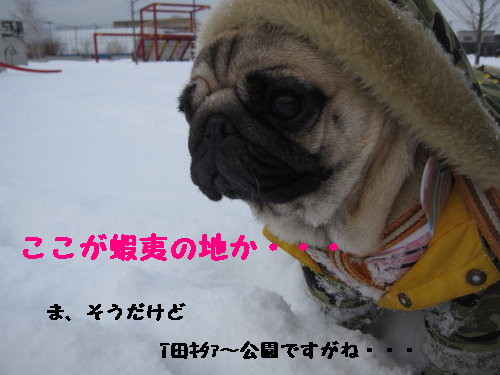 IMG_0374_1.jpg