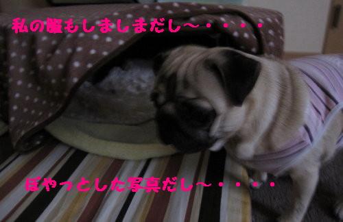 IMG_0381_2.jpg
