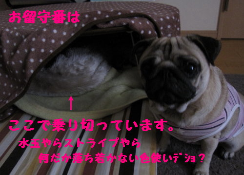 IMG_0382_1.jpg