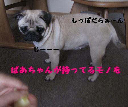 IMG_0386_1.jpg