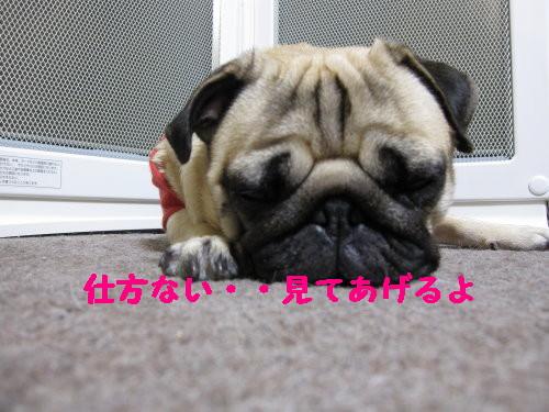 IMG_0406_1.jpg