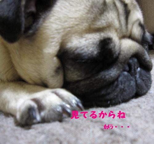 IMG_0407_1.jpg