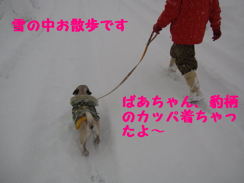 IMG_0449_1.jpg