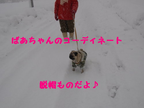 IMG_0451_1.jpg