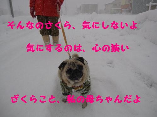 IMG_0452_1.jpg