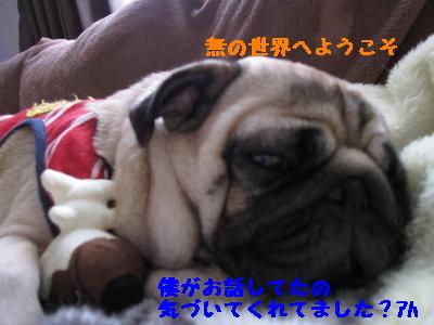 IMG_0460_1.jpg