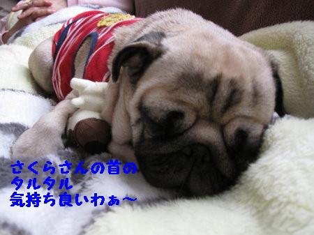 IMG_0463_1.jpg