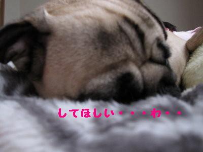 IMG_0467_1.jpg