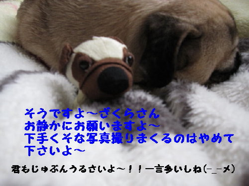 IMG_0469_1_1.jpg