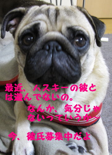 IMG_0476_1.jpg