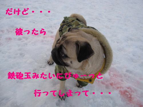 IMG_0499_1.jpg