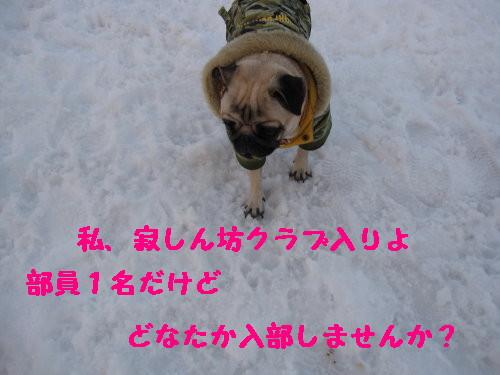 IMG_0500_1.jpg