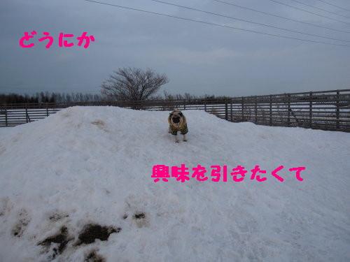 IMG_0501_1.jpg