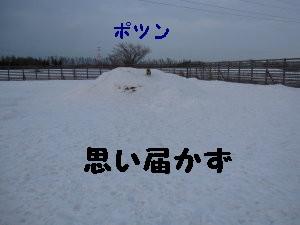 IMG_0503_1.jpg