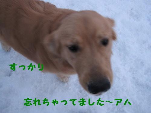 IMG_0513_1.jpg