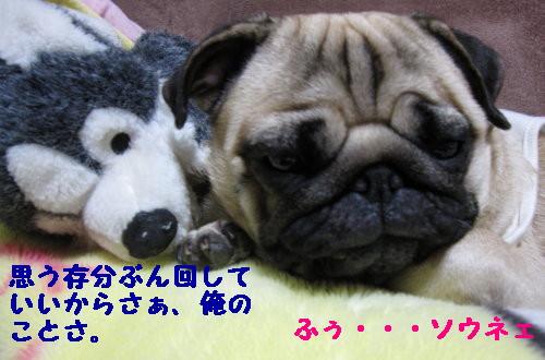 IMG_0516_1.jpg