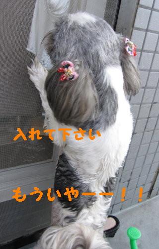 IMG_0900_1.jpg