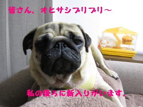 IMG_0916_1.jpg