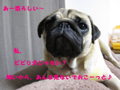 IMG_0921_1.jpg