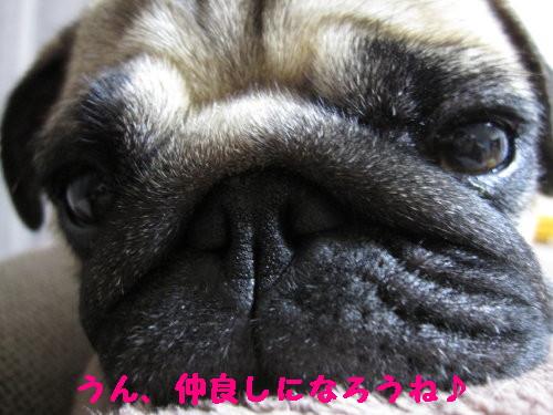 IMG_0924_1.jpg