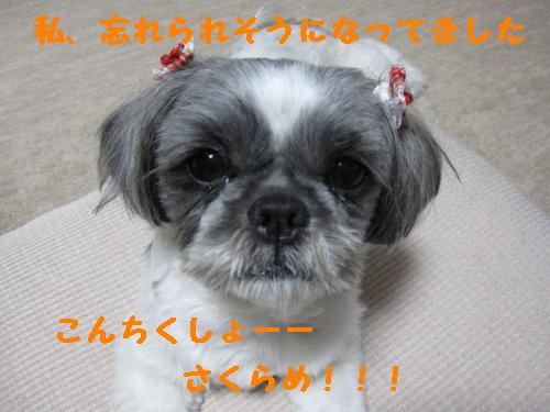 IMG_0927_1.jpg