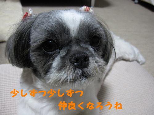 IMG_0929_1.jpg