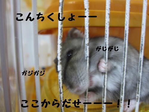 IMG_0935_1.jpg