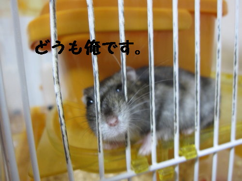 IMG_0938_1.jpg