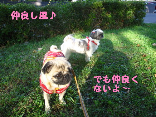 IMG_0971_1.jpg