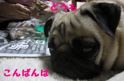 IMG_1006_1.jpg
