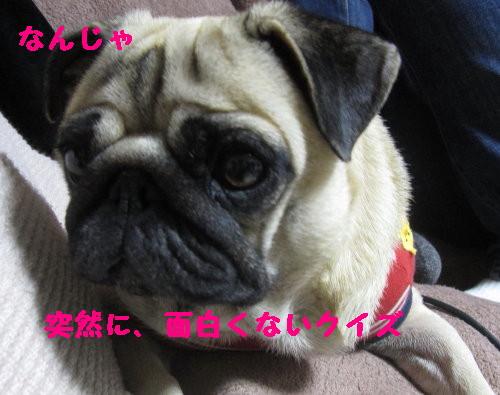 IMG_1024_1.jpg