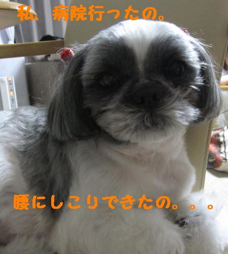 IMG_1027_1.jpg
