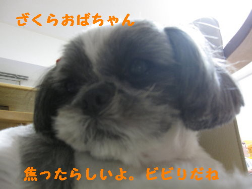 IMG_1031_1.jpg