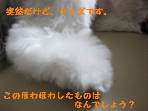 IMG_1032_1.jpg