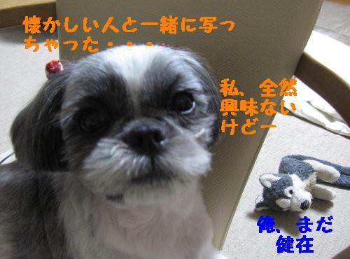 IMG_1037_1.jpg