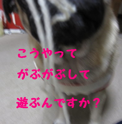 IMG_1052_1.jpg